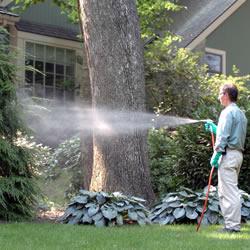 https://estore.uga.edu/C27063_ustores/web/uploaded_images/store_284/home_spraying_trees.jpg